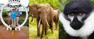 10 Day Safaris into Uganda's Best Places Seeing Wildlife - Kibale Forest Camp Tracking the Chimpanzee and Bush Tented Camp